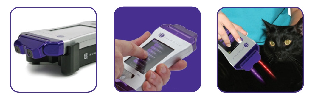 Violet Amp Red Pain Relief Lasers For Veterinarians